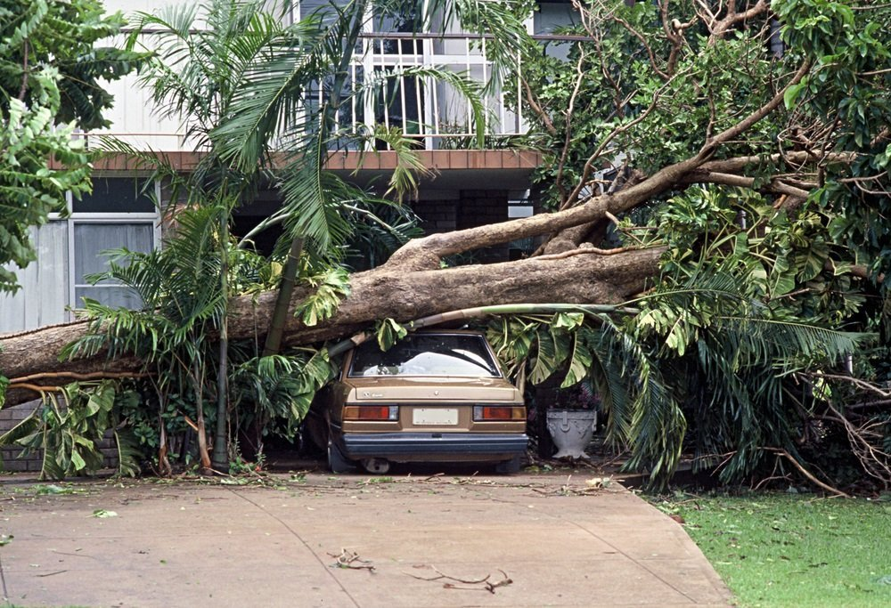 what to do when a tree falls on your property
