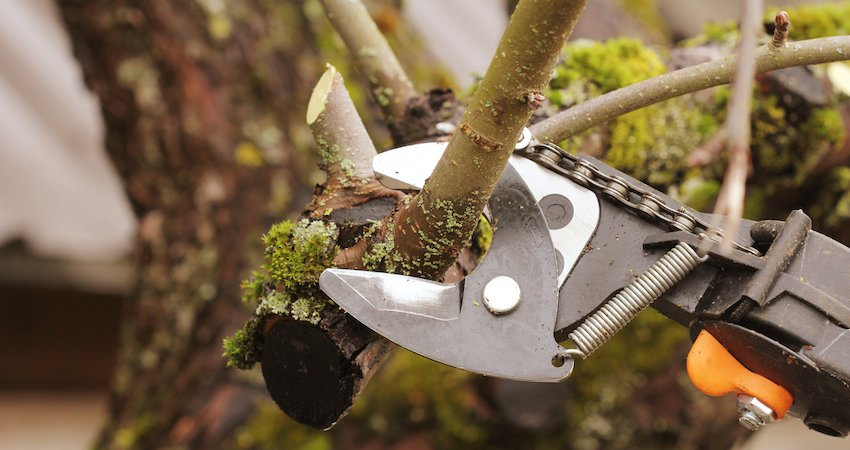 How to Prune Trees the Right Way