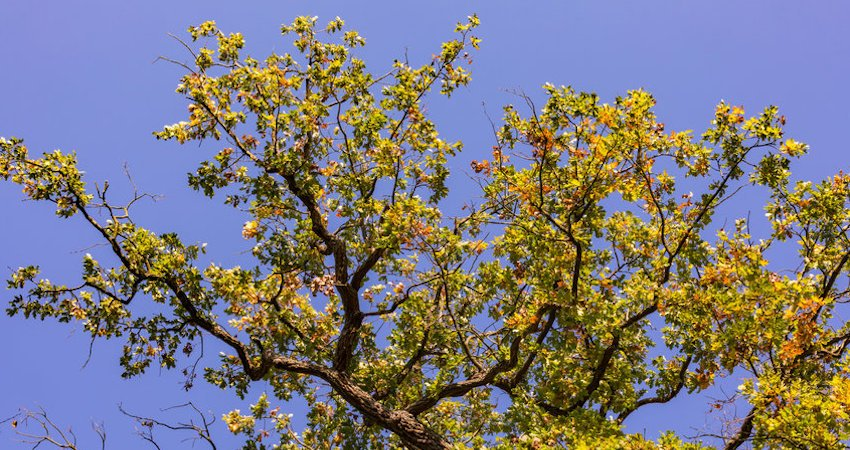 Can You Spot These 5 Most Common Tree Diseases?