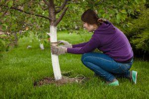 most common tree diseases