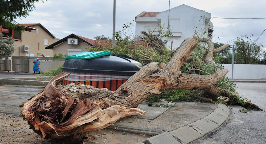 insurance benefits and tree removal
