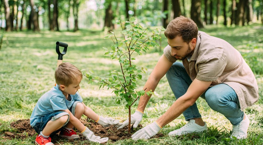 protect young trees from wind damage