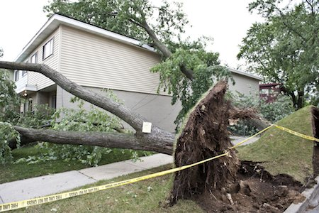 Staying Safe Around Your Trees After a Storm