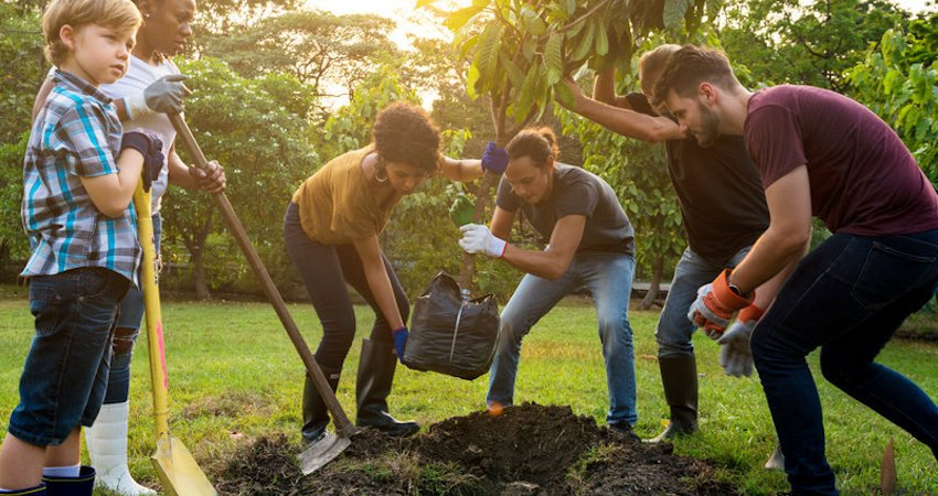 3 Types of Trees You Should Not Plant in Your Yard